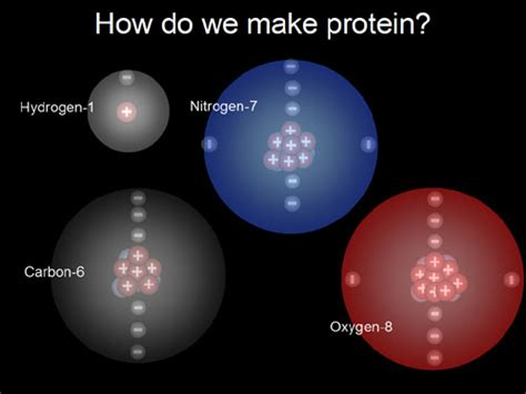 protein elements building organic compounds