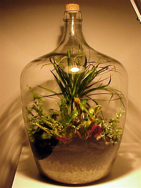 Garden In A Bottle | how to make a bottle garden contentzza com
