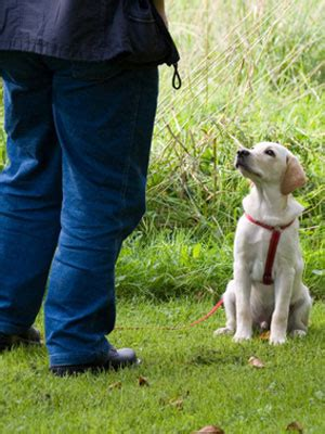 tips for housebreaking a puppy pet care tips housebreaking a puppy at womansday