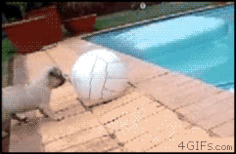 pug fails 25 gifs of dogs who failed but we them anyway barkpost