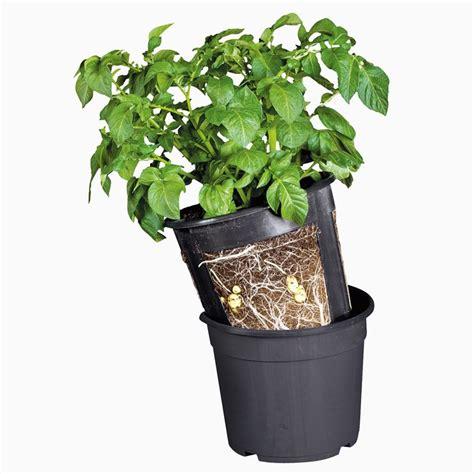 coltivare patate in vaso coltivare in terrazzo fare giardinaggio coltivare in