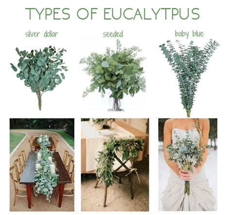 best type of tree for check out these ideas to include eucalyptus in your wedding
