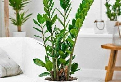 zimmerpflanzen die wenig licht brauchen sch 246 ne zimmerpflanzen die wenig licht brauchen