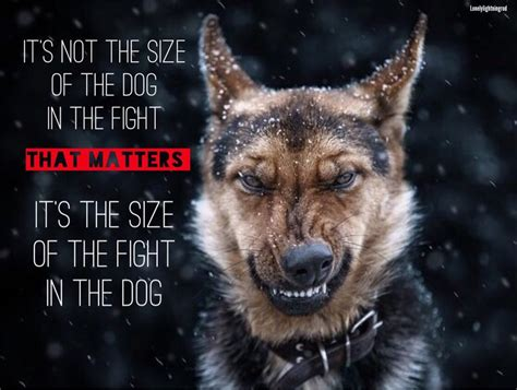 it s not the size of the it s not the size of the in the fight that matters you can do anything