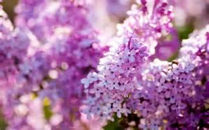 Cute Spring Flower » Ideas Home Design
