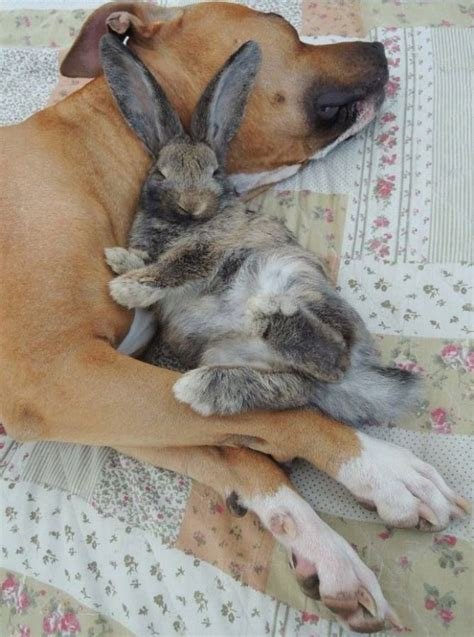 images  ridiculously cute rabbits