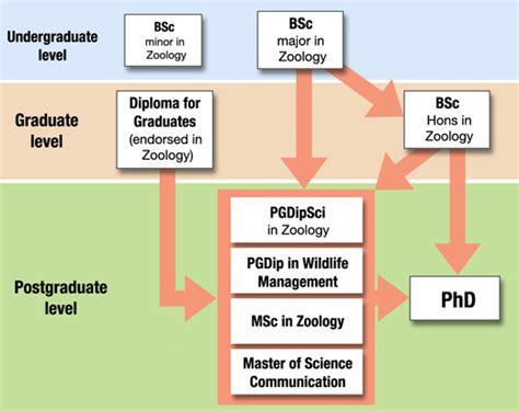 Requirements To Be A Zoologist by Studying Zoology Department Of Zoology Of Otago New Zealand