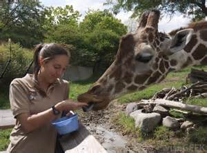 Requirements To Be A Zoologist veterynary and zoologist