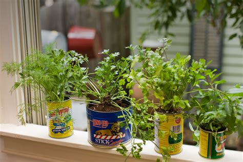 window herb harden indoor herb garden relish