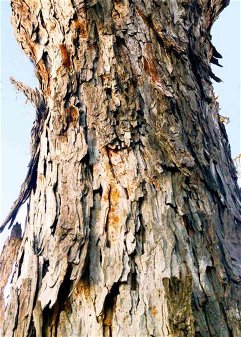 bark   beautiful neil sperrys gardens