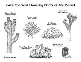 desert plants great for dioramas books projects