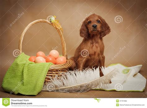 puppy eggs puppy and basket with easter eggs stock photography image 37751682