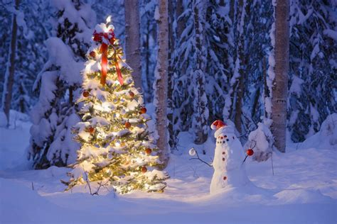 snowy alaskan cluster light tree snowman with santa hat hanging ornaments on a tree in a snow covered birch forest in
