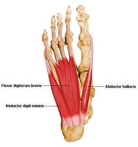 plantar foot get domain pictures getdomainvids