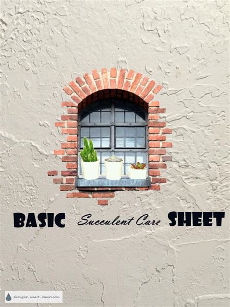 basic overwintering basic succulent care sheet a free
