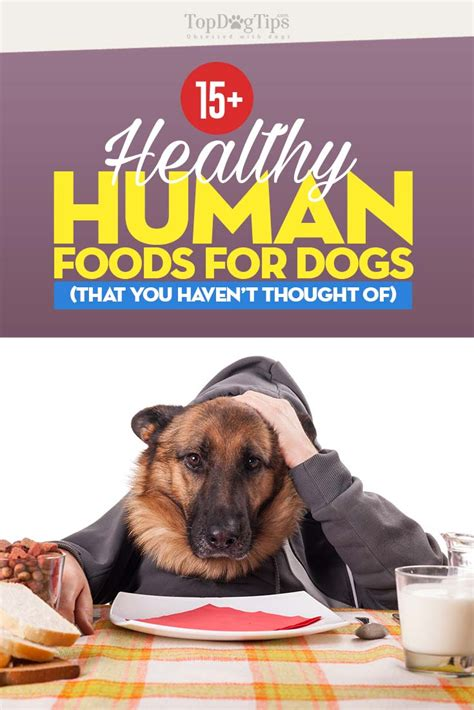 best food for dogs 16 best human foods for dogs that you t thought of