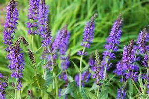 purple weeds by aabott
