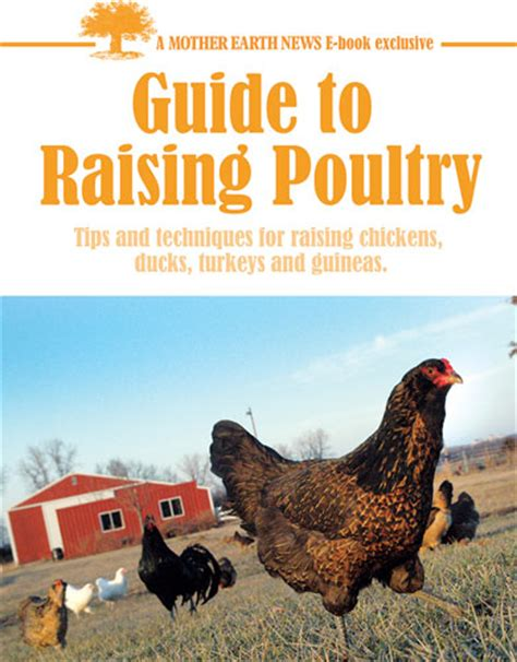 Guide To Raising Backyard Chickens Capper S Farmer Earth News Guide To Raising Poultry E Book
