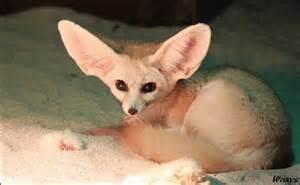 baby fennec fox pet car interior design