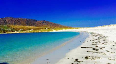 dogs bay water and white sand to walk picture of s bay roundstone