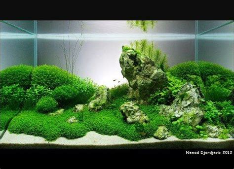 Aquarium Aquascaping Ideas by 117 Best Images About Freshwater Planted Aquarium On