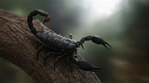 scorpio background black scorpion hd wallpapers hd wallpapers