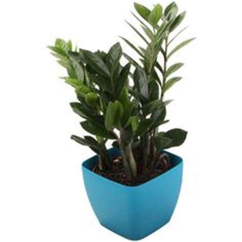 lights plants  indoor  pinterest