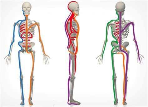 cadenas musculares philippe cignion pdf m 233 todo cadenas miofasciales 174 curso base en madrid