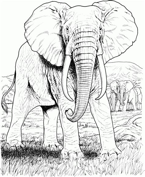 dibujos realistas wikipedia dibujo realista de un elefante hd dibujoswiki com