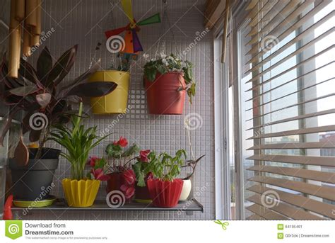 House Plants For Window Home Plants By The Window Interior Sunset