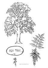 beech tree coloring page 桃树简笔画图片 快步热图 快步摄影信息网