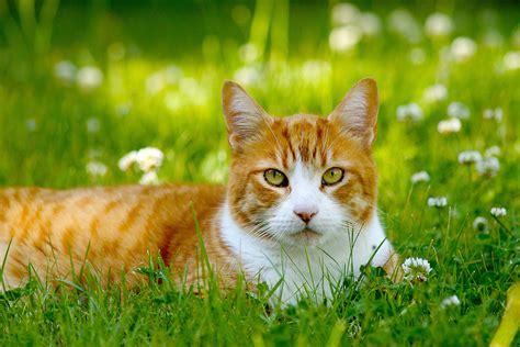 imagenes impresionantes de gatos comportamento das ra 231 as de gatos parte 1 gera 231 227 o pet