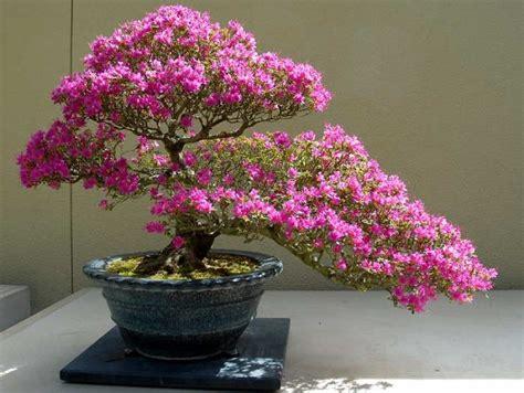 Tusukan Buah Pot Bunga cara merawat tanaman bunga dalam pot tanaman hias bunga buah dan sayur