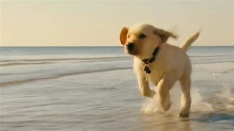 marley and me puppy years marley and me the puppy years to answer all your lingering marley and me questions