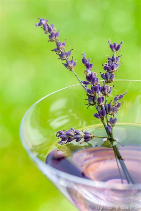 lavender martini lavender martini gin drinkwire