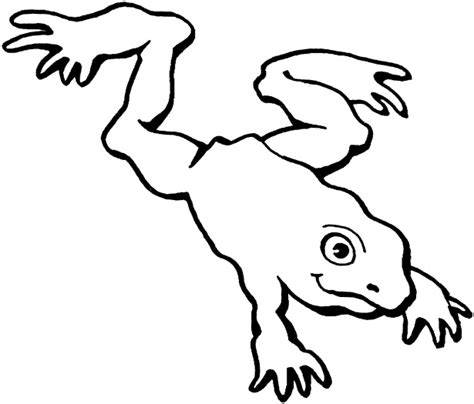 frog coloring page outline tree frog outline clipart panda free clipart images