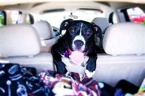 Hund Im Auto Hitze by Hund Bei Hitze Im Auto Scheibe Einschlagen Im Notfall