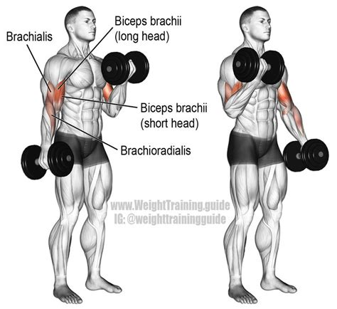 Incline Bench Crunch Dumbbell Curl An Isolation Exercise Target Muscle