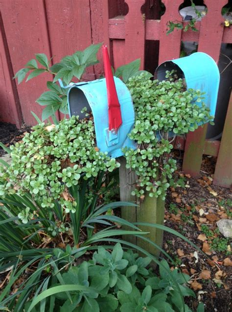 beautiful mailbox planters      wow