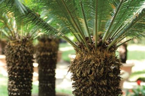 giardino di boboli pianta foto in visita a boboli paradiso delle piante 1 di 4