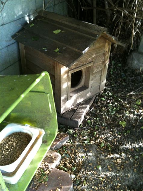 feeding station 8 must haves for a top notch feral feeding station fixnation