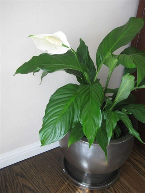 house plant identification 62 best images about my house plants on pinterest