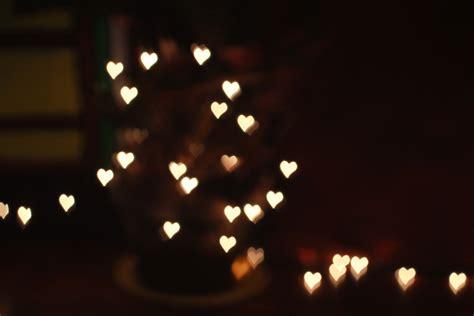 rose christmas lights