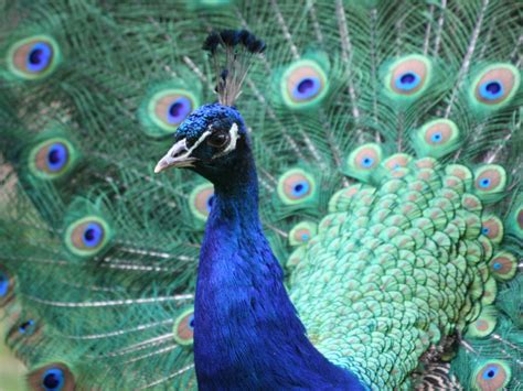 zoologischer garten magdeburg ggmbh ausschreibungen landeshauptstadt magdeburg
