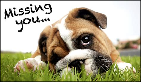 i miss you puppy miss you miss you friends family ecard free christian ecards greeting cards