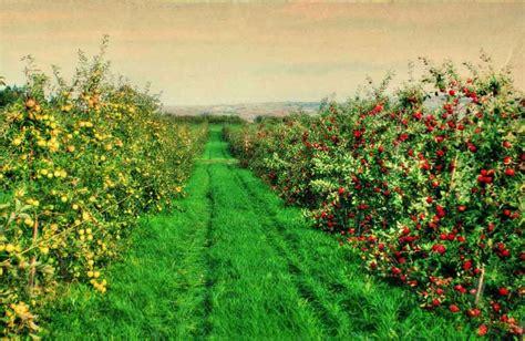 apple orchard beak skiff apple orchard