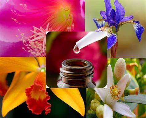 Imagenes Flores Bach | comprar flores de bach buscaterapias cl