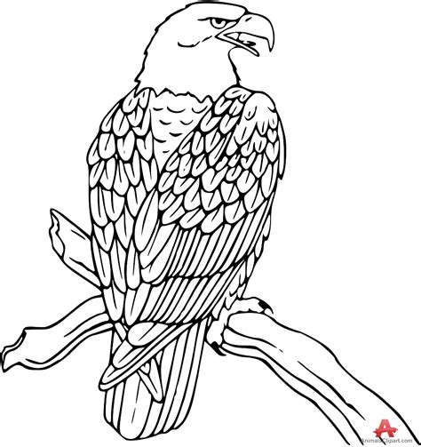 coloring sheet of eagle eagle outline images clipart best