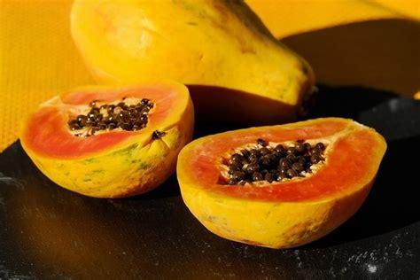 propiedades medicinales de la papaya botanica propiedades curativas de la papaya
