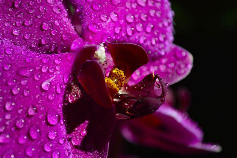 Come Bagnare Orchidee by Orchidea Phalaenopsis Come Bagnarla